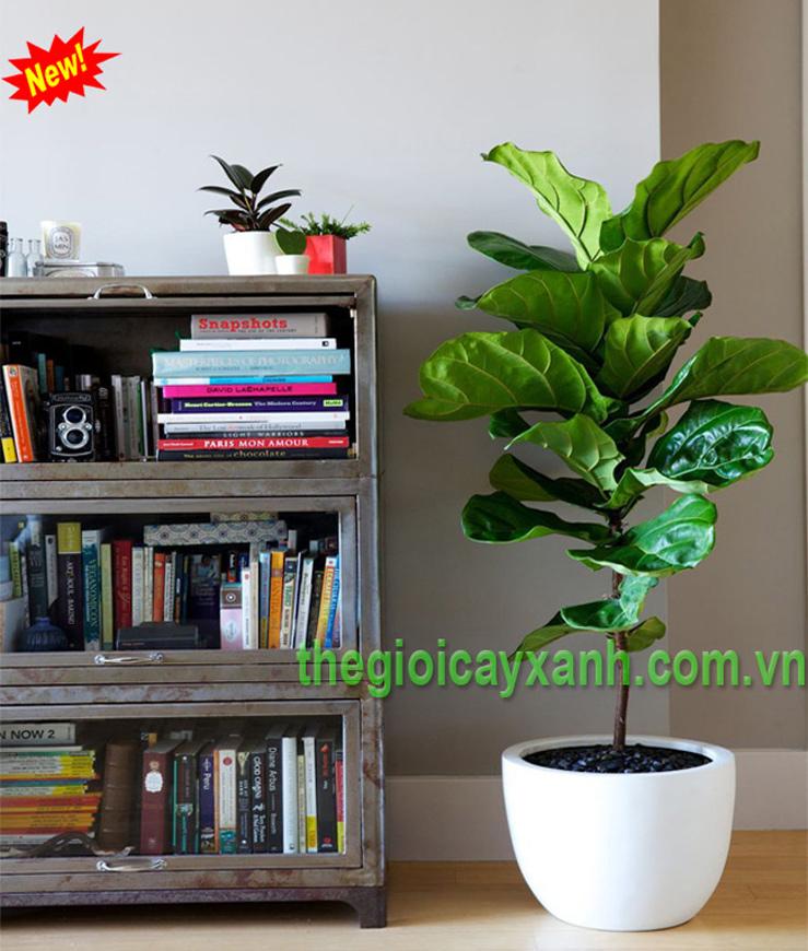 Cho thuê cây xanh nội thất văn phòng