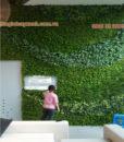 thi công tường cây giả tại tphcm