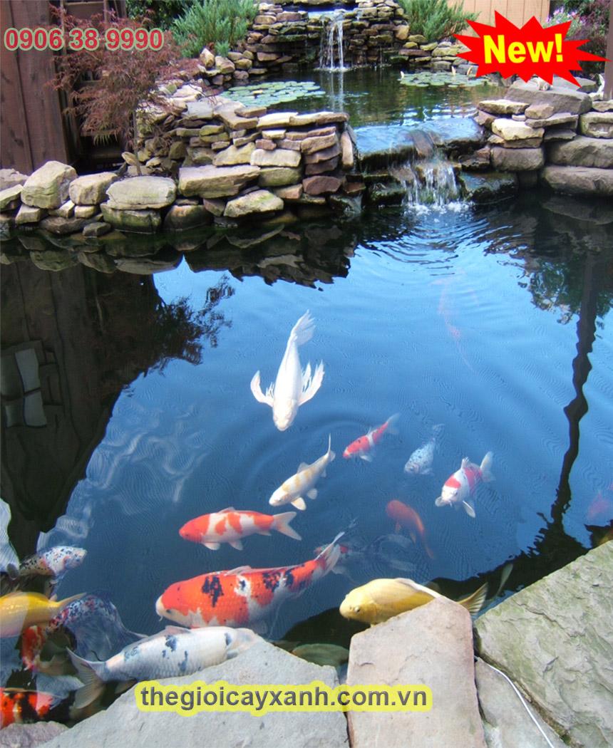 kích thước chuẩn của hồ cá koi la bao nhiêu 1