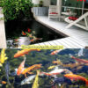 thiết kế thi công hồ cá koi tphcm12