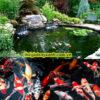 thiết kế thi công hồ cá koi tphcm6