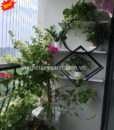 2Mẩu trang trí ban công nhà chung cư nhỏ đẹp MS BC666