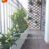8Mẩu trang trí ban công bằng cây xanh đẹp MS BC777