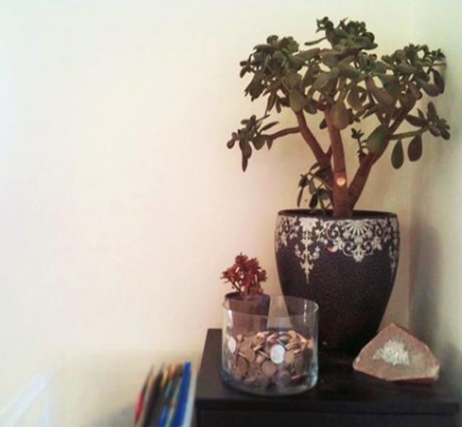 cây xanh văn phòng cho phong thủy