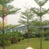 cay-bang-dai-loan-6